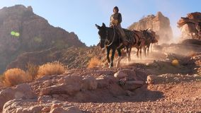 Mules at the Grand Canyon. Mules rider at Grand Canyon establish shot clip stock video