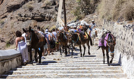 Mules in Santorini Stock Photos