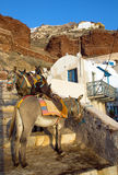 Mules waiting in Ammoudi Royalty Free Stock Image