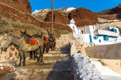 Mules waiting on Santorin Stock Photos