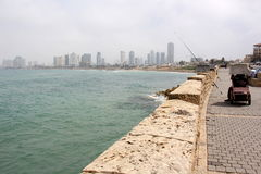Mulet i Tel Aviv Royaltyfri Fotografi