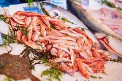 Mulet rouge frais à vendre sur le marché de poissons Images stock