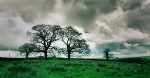 Mulet träd - förhöjt Royaltyfri Fotografi