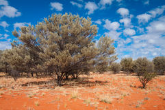 Mulga country Royalty Free Stock Images