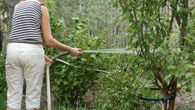 A mulher é plantas molhando em seu jardim de uma mangueira vídeos de arquivo