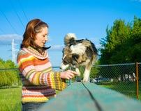 A mulher é treinamento do cão Imagem de Stock Royalty Free
