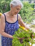Mulher adulta com as flores no balcão imagens de stock royalty free