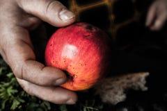 Mulher adulta que oferece uma maçã vermelha Imagens de Stock Royalty Free