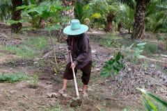 Mulher adulta que trabalha no jardim imagem de stock