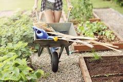 Mulher adulta que trabalha no jardim vegetal Imagens de Stock