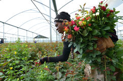 Mulher africana Fotos de Stock Royalty Free