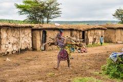 Mulher africana do tribo do Masai que leva um grupo da madeira em seu v imagens de stock