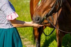 A mulher alimenta um cavalo com o animal do favorito das mãos imagem de stock