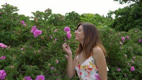 A mulher aproxima Rose Bush Takes uma flor por sua mão e aprecia seu cheiro vídeos de arquivo