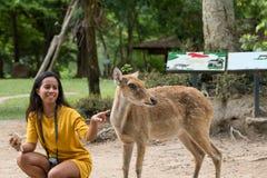 Mulher asiática de sorriso que amola com os cervos do ` s de Eld Imagem de Stock