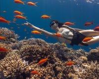 Mulher asiática que freediving em surpreender o recife de corais vívido foto de stock