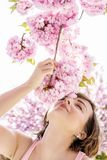 A mulher aspira o ramo de sakura Foto de Stock