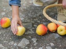 Mulher azarado com maçãs derramadas Fotografia de Stock Royalty Free