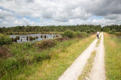 Mulher Biking no parque nacional holandês com floresta e pantanais foto de stock