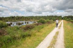 Mulher Biking no parque nacional holandês com floresta e pantanais imagens de stock