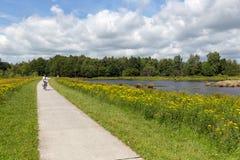 Mulher Biking no parque nacional holandês com floresta e pantanais fotos de stock