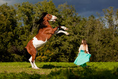 Mulher bonita com um cavalo no campo Menina sobre Fotografia de Stock