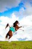 Mulher bonita com um cavalo no campo Menina sobre Imagens de Stock Royalty Free
