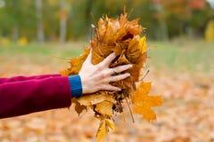A mulher bonita em um revestimento guarda as folhas de outono imagens de stock