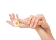A mulher bonita entrega o tratamento de mãos francês com flor da camomila Imagem de Stock Royalty Free