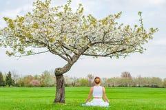 A mulher bonita está praticando o assento da ioga na pose de Lotus perto da árvore da flor foto de stock royalty free