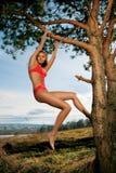 Mulher bonita na árvore imagem de stock royalty free