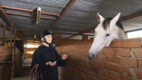 A mulher bonita no capacete alimenta o cavalo com açúcar video estoque