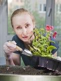 Mulher bonita nova com um petúnia da plântula da trança em umas caixas na primavera foto de stock