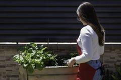 Mulher bonita que toma do jardim de vegetais urbano imagens de stock royalty free