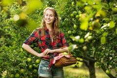Mulher com a cesta completa de maçãs maduras em um jardim Sorriso novo Foto de Stock Royalty Free