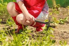 Mulher com a ferramenta de jardinagem que trabalha no jardim Fotografia de Stock
