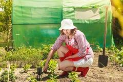 Mulher com a ferramenta de jardinagem que trabalha no jardim Imagens de Stock