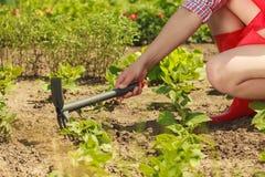 Mulher com a ferramenta de jardinagem que trabalha no jardim Foto de Stock Royalty Free