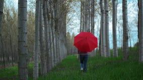 Mulher com guarda-chuva vermelho que anda longe da câmera através da aleia da árvore na tarde nebulosa