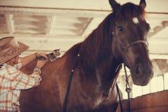Mulher com o animal pequeno do gato no cavalo horseback fotos de stock royalty free
