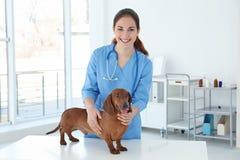 Mulher com o cão na clínica veterinária fotografia de stock