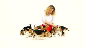 Mulher com o cachorrinho bonito do lebreiro em um branco no estúdio filme