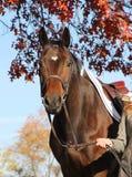 Mulher com o cavalo de Brown na queda Fotos de Stock Royalty Free