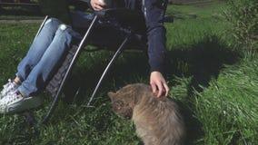 Mulher com o gato cinzento na grama video estoque