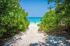 A mulher com o terno de natação de duas partes e os peixes envenenam árvores na praia da areia na ilha de Tachai Imagens de Stock