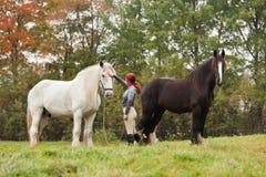 Mulher com os dois cavalos de condado fotos de stock