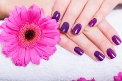 Mulher com os pregos roxos manicured bonitos imagem de stock