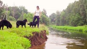 Mulher com os quatro cães-pastor bernese perto de um rio video estoque