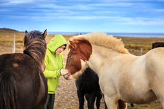 Mulher com pôneis islandêses Fotos de Stock Royalty Free