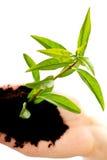 Mulher com planta e sujeira à disposição Fotografia de Stock Royalty Free